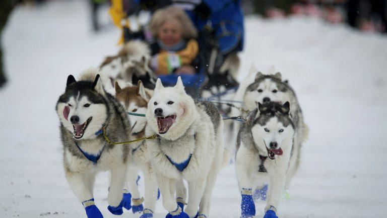 Dog Sledding The Iditarod Trail
