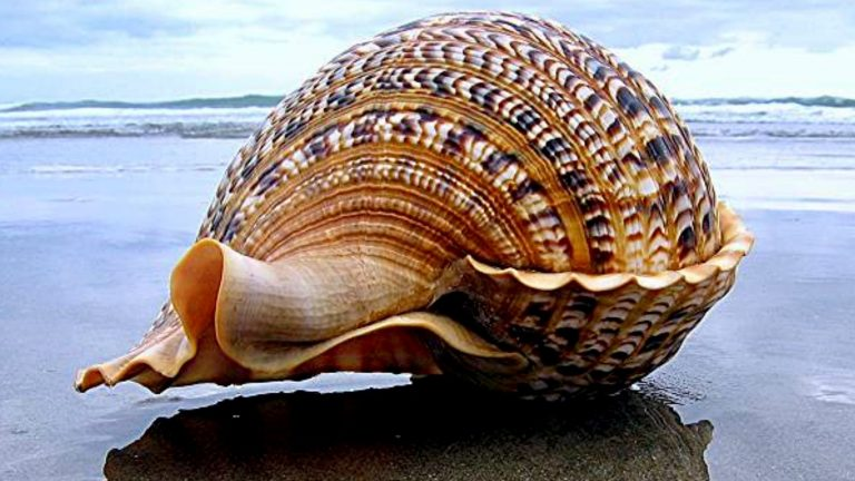 Guide For Planning The Best Shelling Vacation in Southwest Florida This Year