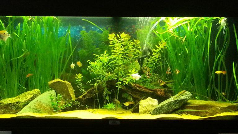 Choosing the Best Live Freshwater Aquarium Plants in the World